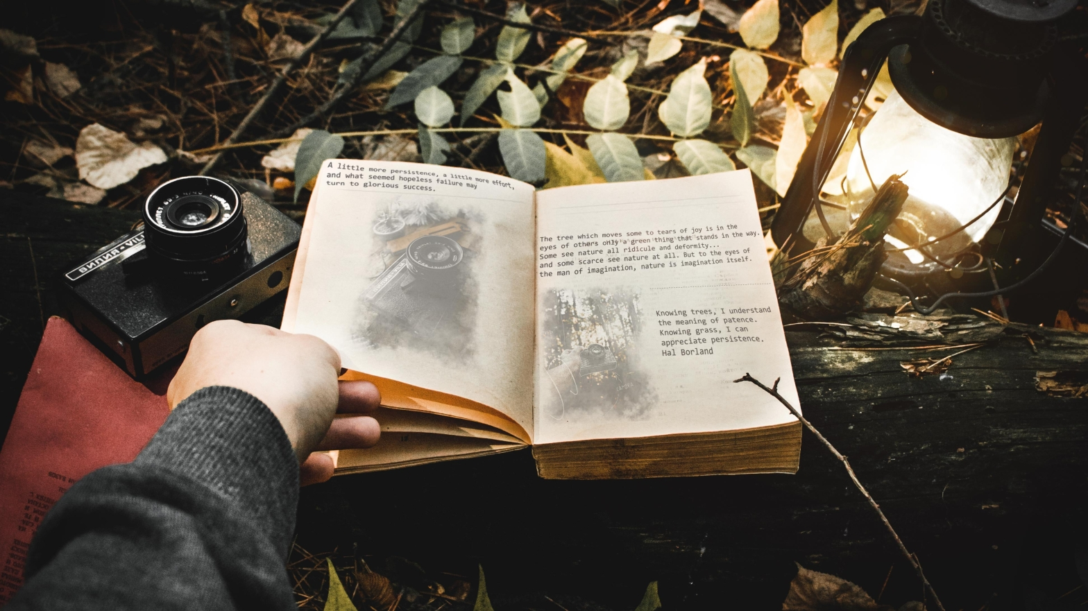 Hand leafing through open book in a dark setting on a bed of leaves, with a camera and lantern on either side of the book